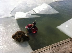 Tång o is