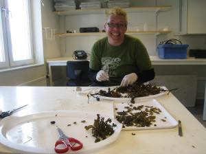 Att klippa av tillräckligt många receptakel för ett experiment tar tid.