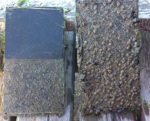 Havstuplansplattor, 20150813, rengjord för 4 veckor sen