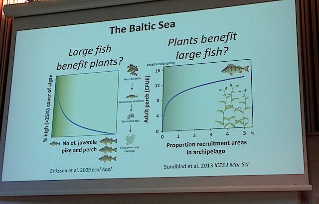1Large fish -plant benefits