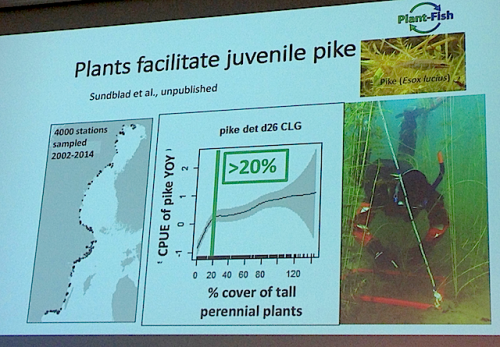 2PLants juvenlie pike