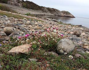 1vacker blommande strand
