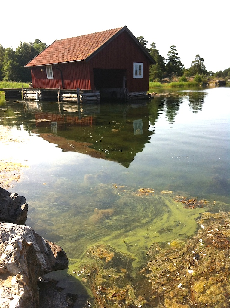 9cyanobakterier vid båthuset160823