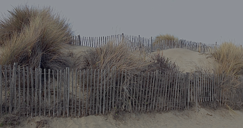 dyn gräs vid stranden
