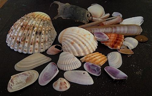 Skalsamling från strand vid Montellier