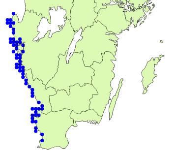 utbredningskarta för Brogniartella