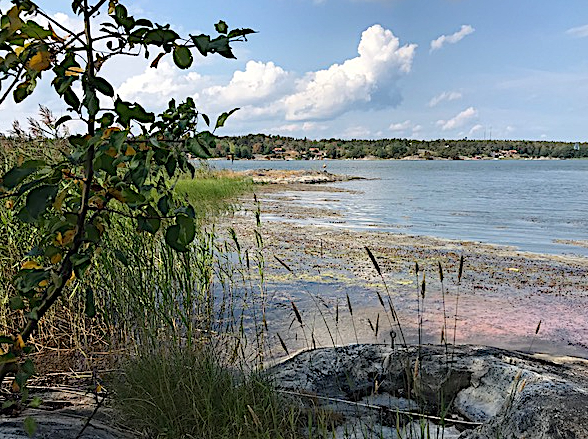 drivande tång vik Orrön 20180720