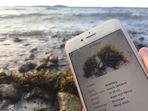 Livet i Havet app