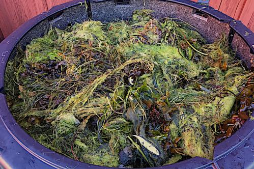 Kompost nr 3 20180917