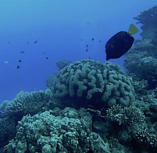 2 Underwater coral