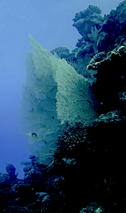3 Eilat Observatory corals