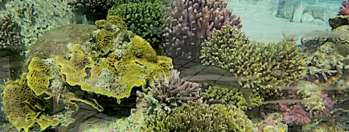 4 Koraller solsidan