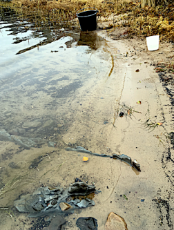 grön ton i vattnet- knippvattenblom i november