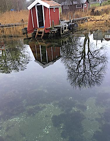 spegelblankt o östersjömusselskal på botten