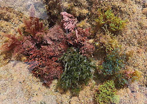 1 .Alg collage Teneriffa 2018