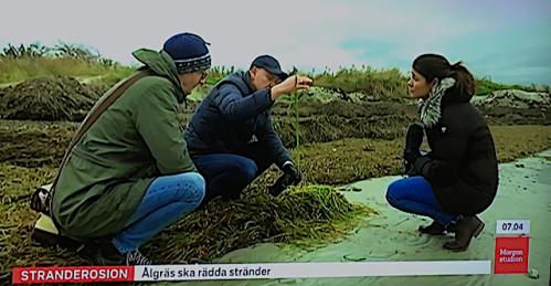 2 Stranderosion Ålgräs 20181031