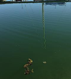 5 drivande tångplanta i hamnen 20190419