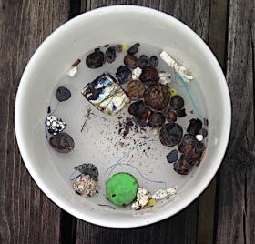 6 Saltö sandstrand mikroplast 20190717