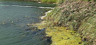 Bild 2 ång o alger driver in i viken