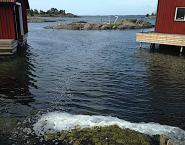 bild 3 drivande alger o skum, Asköviken