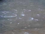10 östersjö issörja