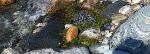 Liten filtkudde samling i strandkanten börjanjuni.