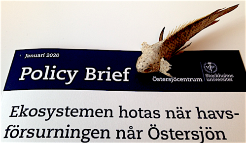 1 Policy brief om försurnig