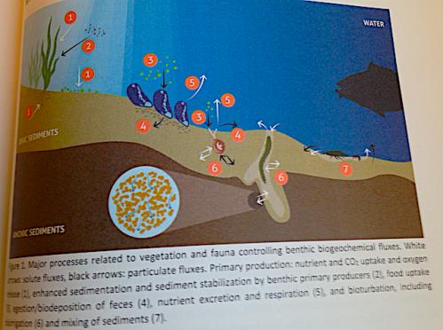processer mellan botten-och vatten