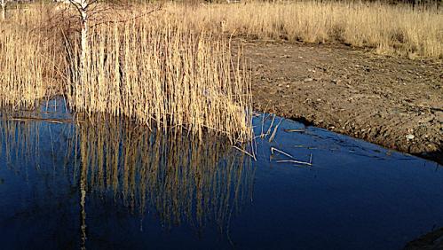Bild 4 bar jord efter muddring