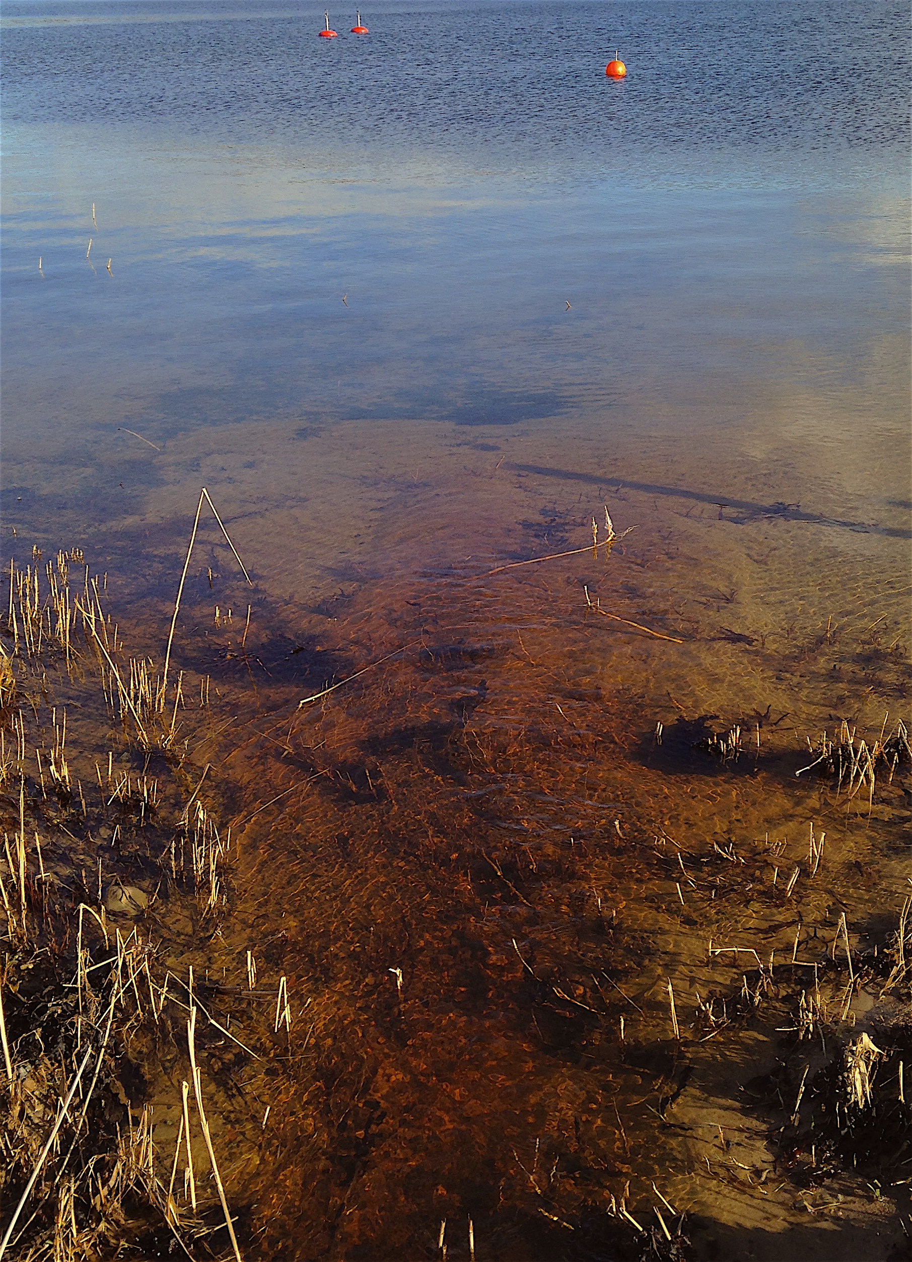 bild 5 Humusrikt vatten