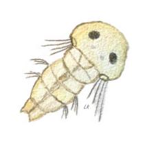 3 Havsborstmask larv