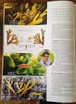 WWF Magasin 20200407 sid3