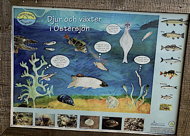 3 Växter o djur i Östersjön