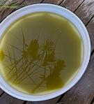 algblomning i vassen