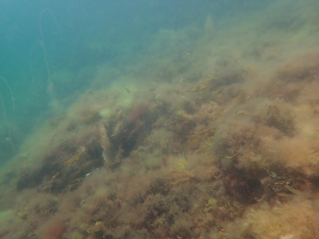 Tångskogen är en viktig miljö för många av havets invånare. Förändingar i tångskogen kan ha stor på verkan på havets ekosystem.